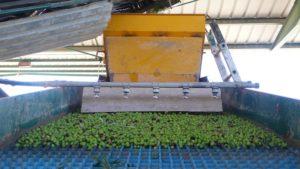 aceite de oliva priego de cordoba